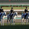 第35回 ホープフルステークス 誘導馬_2(18/12/28)