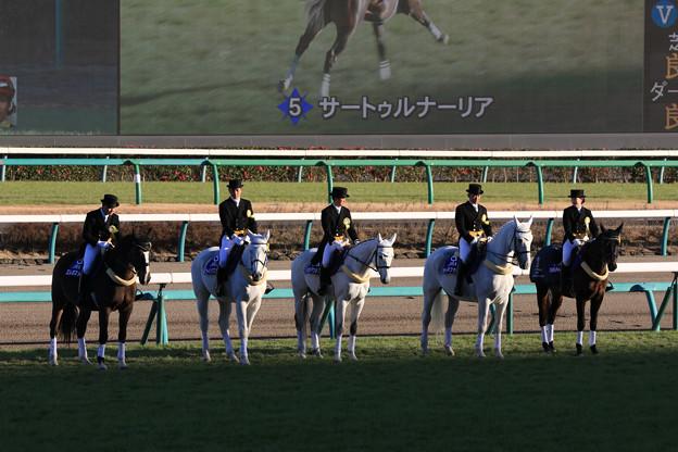 第35回 ホープフルステークス 誘導馬_3(18/12/28)
