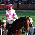 Photos: トーシンブリザード パドック(04/01/31・第18回 根岸ステークス)