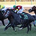 ウインブライト レース(19/01/05・第68回 日刊スポーツ賞 中山金杯)