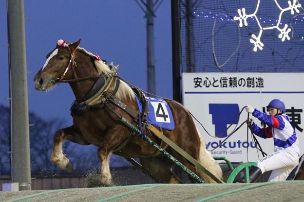 サクラユウシュン レース(18/12/23・5R)
