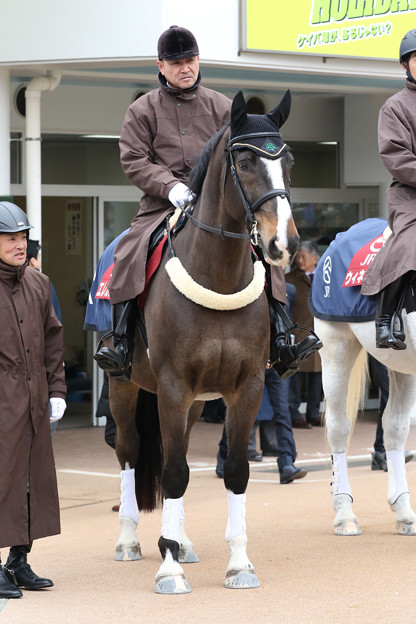 Photos: エレガスト_3(19/01/12・中山競馬場)