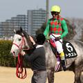 Photos: トラスト レース後_1(19/02/23・春麗ジャンプステークス)