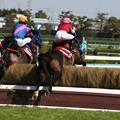オジュウチョウサン レース_1(19/03/09・第21回 阪神スプリングジャンプ)