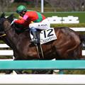 シュッドヴァデル レース(19/03/09・新馬戦)