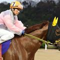 スーパーノヴァ 馬場入場(19/03/10・スポニチ杯 第16回 はがくれ大賞典)