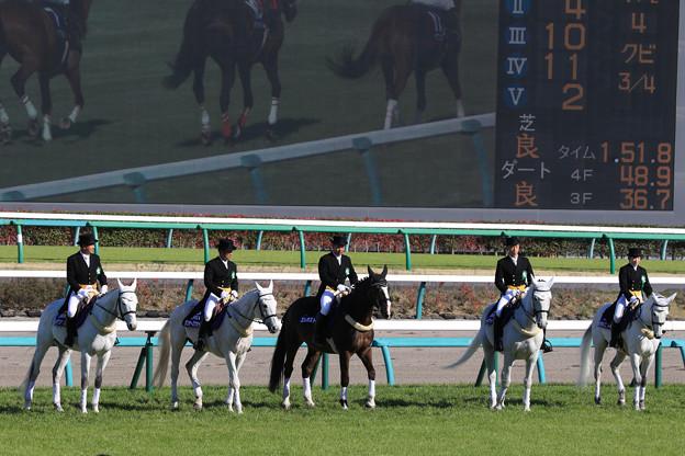 第21回 中山グランドジャンプ 誘導馬_2(19/04/13)