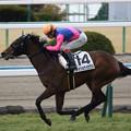Photos: メイショウハナグシ レース(19/02/10・新馬戦)