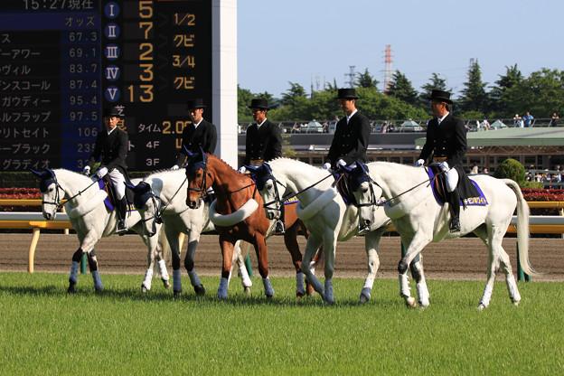 第24回 NHKマイルカップ 誘導馬_3(19/05/05)