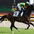Photos: スイーズドリームス 返し馬(19/05/04・8R)