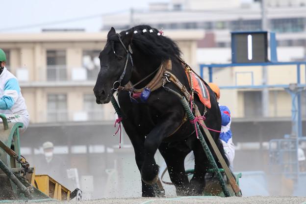 ブラックシシ レース(19/02/03・5R)