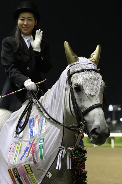 川崎競馬場 誘導馬_2(19/07/03)