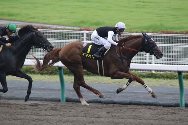 スマハマ レース(19/07/14・名鉄杯)