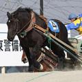 カイセイフクノカミ レース(19/03/02・2R)