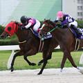 Photos: ポルタディソーニ レース_2(19/07/15・スポーツニッポン賞 第23回  名港盃)