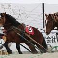 Photos: キタノテンカ レース_1(19/03/02・6R)