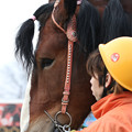 Photos: キタノテンカ_2(19/03/02・6R)