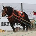 Photos: シャイニング レース(19/03/02・7R)