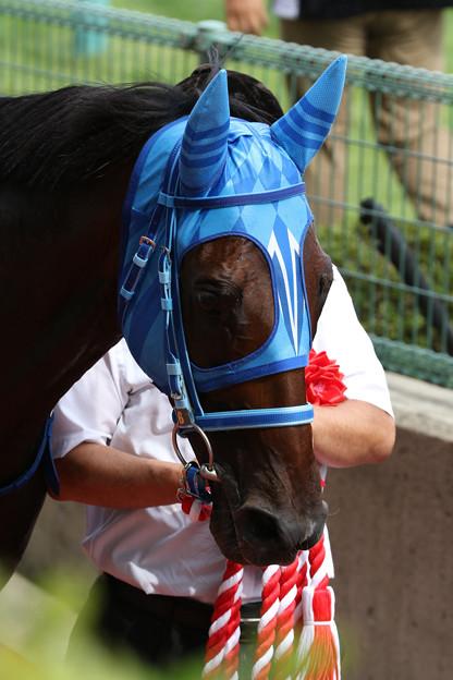 Photos: マイブルーヘブン_2(19/08/24・第21回 新潟ジャンプステークス)