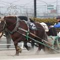 Photos: ホクセイキカンボ レース(19/03/02・8R)