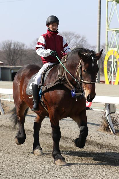ホクトレッド(19/03/03・1R)
