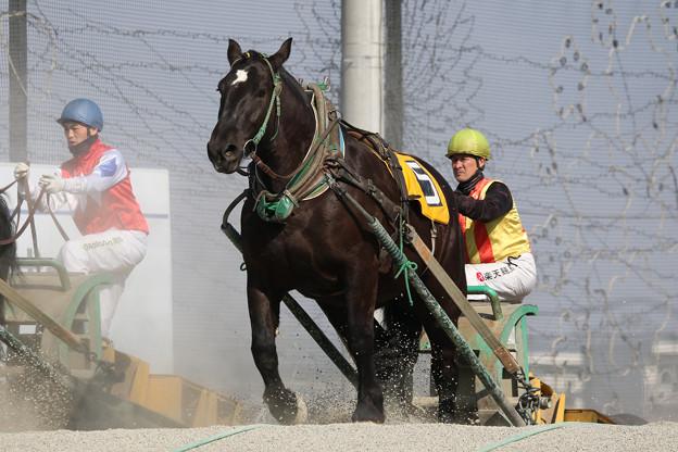 ジェイガーベラ レース(19/03/03・2R)