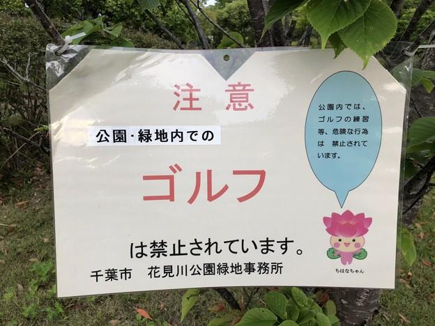 ちはなちゃん 注意 花見川千本桜緑地