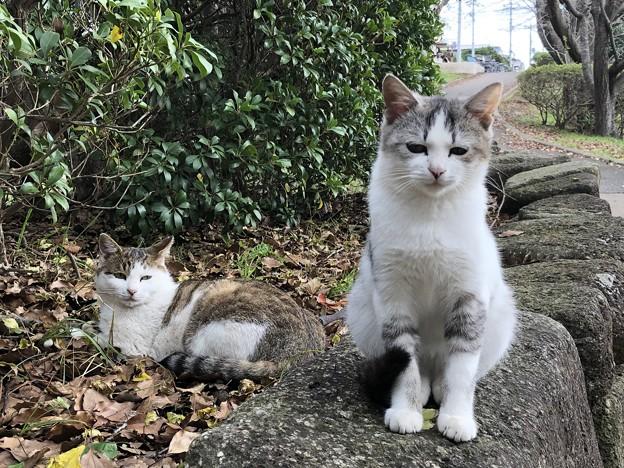 猫 神場公園