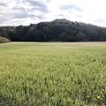 田圃 畑町