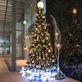 写真: クリスマスツリー 中野セントラルパーク