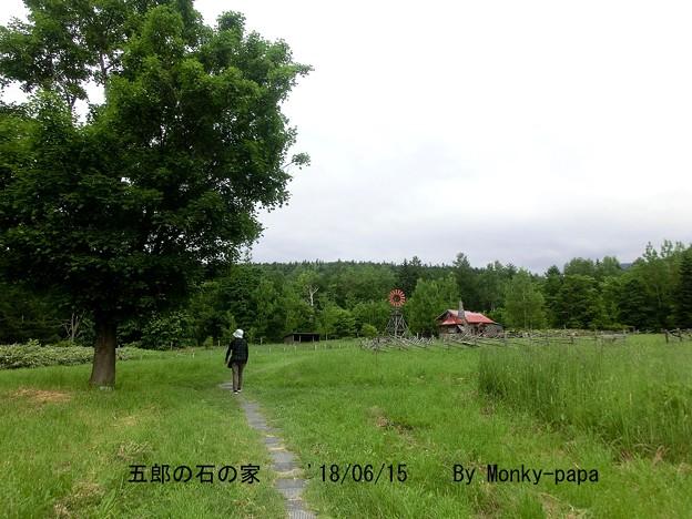 写真: 180615-6
