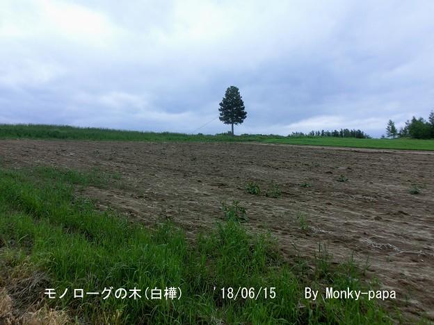 写真: 180615-9