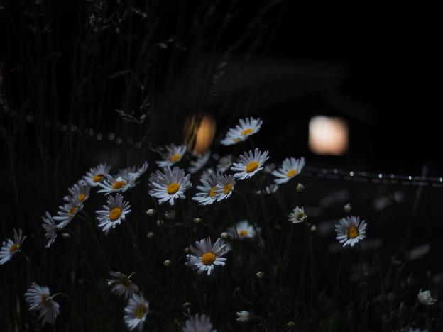 Photos: 街灯の下