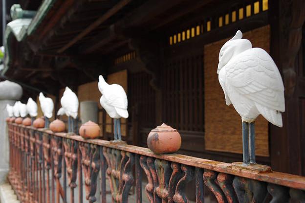 Photos: s6589_道後温泉本館の白鷺フェンス
