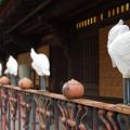 s6589_道後温泉本館の白鷺フェンス