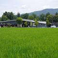 s1370_大王わさび農場
