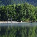 s1650_大正池の立ち枯れ木