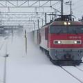Photos: s8984_羽越本線貨物列車_EF510-13他