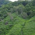 s4465_ヒグマ_カシュニの滝の北崖