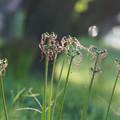 Photos: 花の名残り