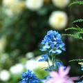 写真: 花の園