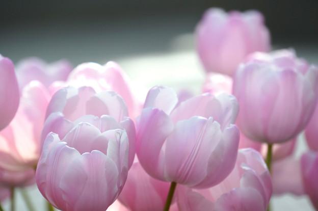 ピンクのふわふわ