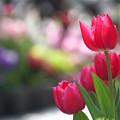 写真: 春を呼ぶ