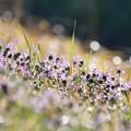 写真: 春の野