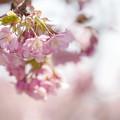 写真: 浅い春