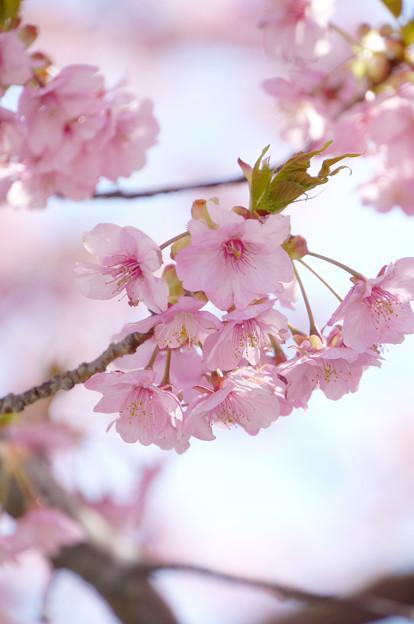 写真: 春をまどろむ