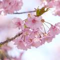 春をまどろむ