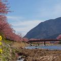 写真: 橋を臨む