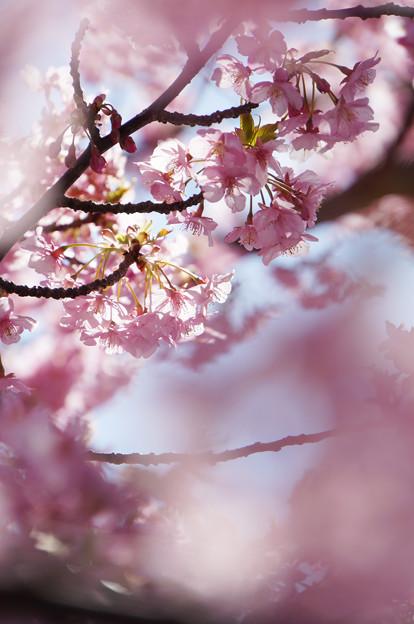 光の花びら