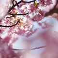 写真: 光の花びら